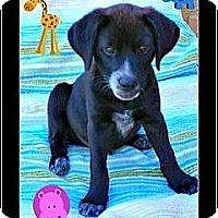 Adopt A Pet :: TJ - Scottsdale, AZ