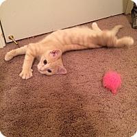 Adopt A Pet :: Vinnie - Chesterfield Township, MI