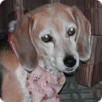 Adopt A Pet :: Taffy Apple - Phoenix, AZ