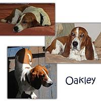 Adopt A Pet :: Oakley - Marietta, GA