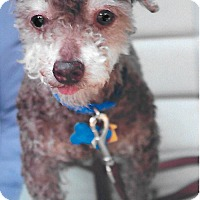 Adopt A Pet :: Toby Joe - Sharonville, OH