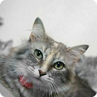 Adopt A Pet :: Wilma - Cedar Rapids, IA