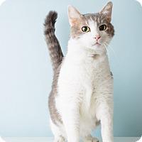 Adopt A Pet :: Sammy - Hendersonville, NC