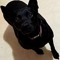 Adopt A Pet :: Sheba - Woodstock, GA