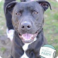 Adopt A Pet :: Vega - Ann Arbor, MI