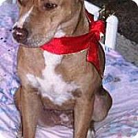 Adopt A Pet :: Cutie - Gilbert, AZ