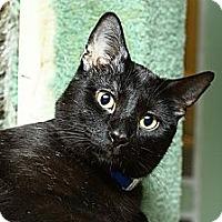 Adopt A Pet :: Kansas - Lombard, IL