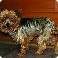 Adopt A Pet :: Katie Perry - South Amboy, NJ