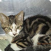 Adopt A Pet :: Shawn - Riverside, RI
