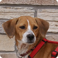 Adopt A Pet :: Sandy - Norman, OK