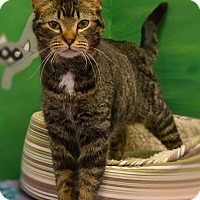 Adopt A Pet :: Georgia - Byron Center, MI