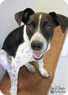Collie Mix Dog for adoption in Yukon, Oklahoma - Scilly