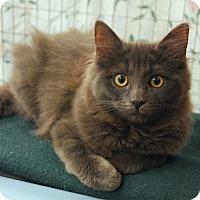 Adopt A Pet :: Chloe & Ivy - Winchendon, MA