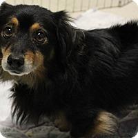 Adopt A Pet :: Leon - Davis, CA