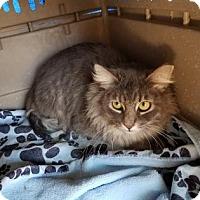 Adopt A Pet :: Safe 1 - Tucson, AZ