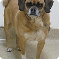 Adopt A Pet :: Charles - Gary, IN
