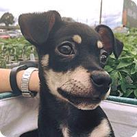 Adopt A Pet :: Noah - Weatherford, TX