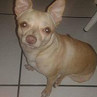 Adopt A Pet :: BABY - Hollywood, FL