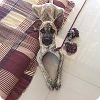 Adopt A Pet :: 'SUA' - Agoura Hills, CA