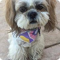 Adopt A Pet :: Gigi - Las Vegas, NV