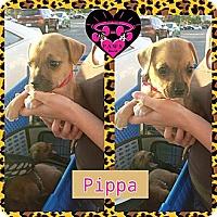Adopt A Pet :: Pippa - Fowler, CA