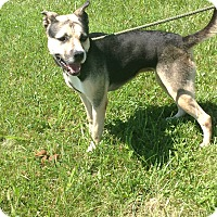 Adopt A Pet :: #181-14 RESCUED! - Zanesville, OH