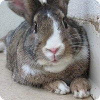 Adopt A Pet :: Buster Brown - Newport, DE
