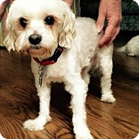 Adopt A Pet :: Litney - Wilmington, DE