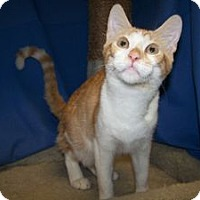 Adopt A Pet :: K-Ts3-Tator - Colorado Springs, CO