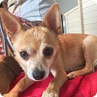 Adopt A Pet :: HONEY - Los Angeles, CA