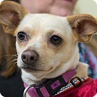Adopt A Pet :: Meadow - Grass Valley, CA