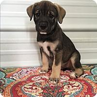 Adopt A Pet :: Mario - Russellville, KY