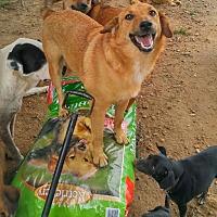 Adopt A Pet :: Tess - Columbia, KY