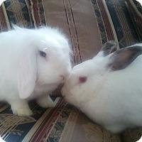 Adopt A Pet :: Laila and Owen - Watauga, TX