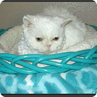 Adopt A Pet :: Pennyanne - Gilbert, AZ