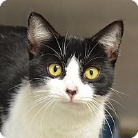 Adopt A Pet :: 10309262 - Brooksville, FL