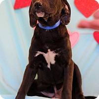 Adopt A Pet :: Vallis - Waldorf, MD