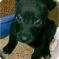 Adopt A Pet :: JAMIE - dewey, AZ