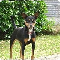 Adopt A Pet :: Muffy - Nashville, TN
