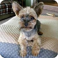 Adopt A Pet :: Rosie - Crestwood, KY