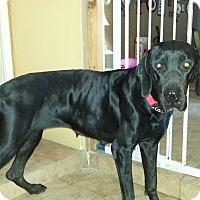 Adopt A Pet :: Shadow - Mesa, AZ