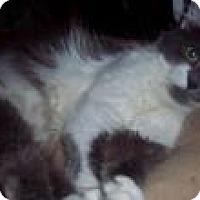 Adopt A Pet :: Mia - brewerton, NY