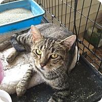 Adopt A Pet :: Stella - McDonough, GA