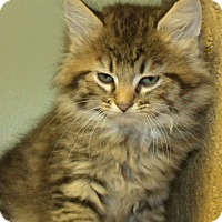 Adopt A Pet :: ASTRO - Acme, PA