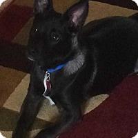 Adopt A Pet :: Pepe - Mesquite, TX