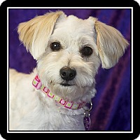 Adopt A Pet :: Fifi - Covina, CA