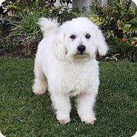 Adopt A Pet :: CALLAHAN - Newport Beach, CA