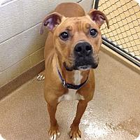 Adopt A Pet :: 1-5 - Triadelphia, WV