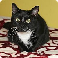 Adopt A Pet :: Rose - Ocean Springs, MS