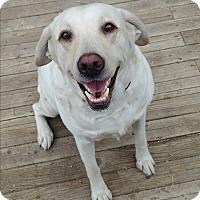 Adopt A Pet :: Maisey - Ogden, UT